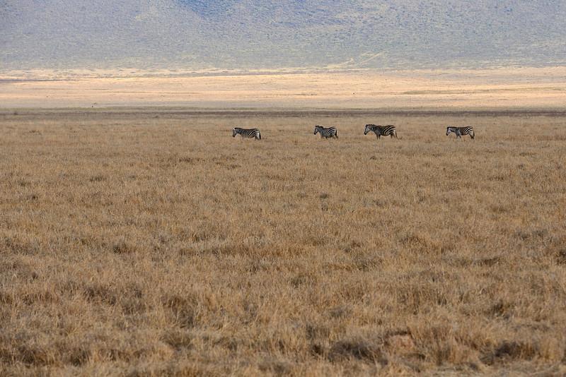 Zebras-scape-01.jpg