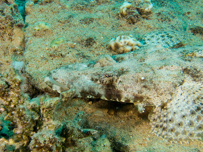 20130602 Dive, Small Gubal