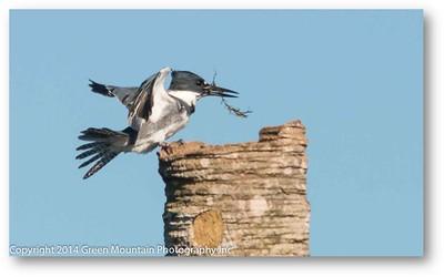369 Fisherbird