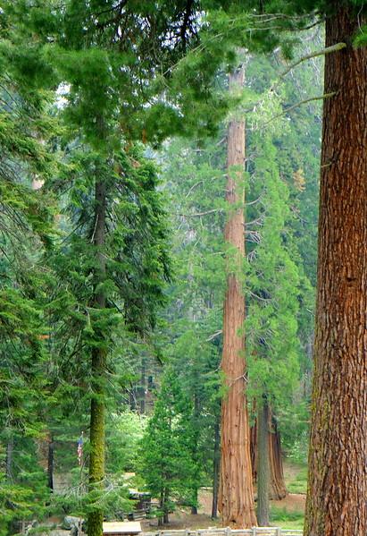 California Day 6 Sequoia 05-30-2017 45.JPG