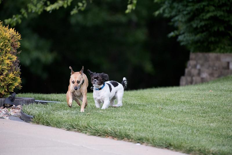 LuLu - Brady - Cooper Play Friends (92 of 109).jpg