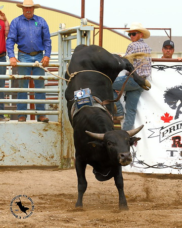 K. Bonkowski Construction Bull Futurity