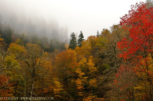 Smoky Mountains-Newfound Gap Tennessee