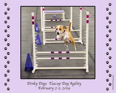 Dinky Dogs TDAA Trial - February 2-3, 2019