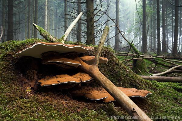 Wald und Einzelbaüme