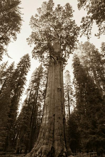 20140823_sequoia_0008.jpg