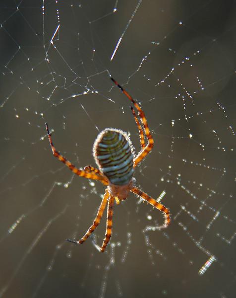 0607 Spider on Web.jpg