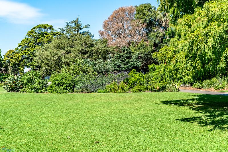 Royal-Botanic-Garden-1038.jpg