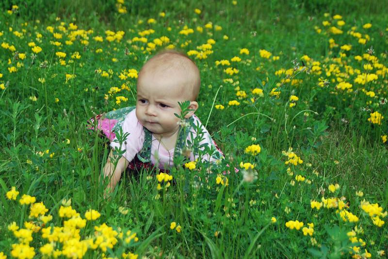 3577 Bloomin' Meadow.jpg