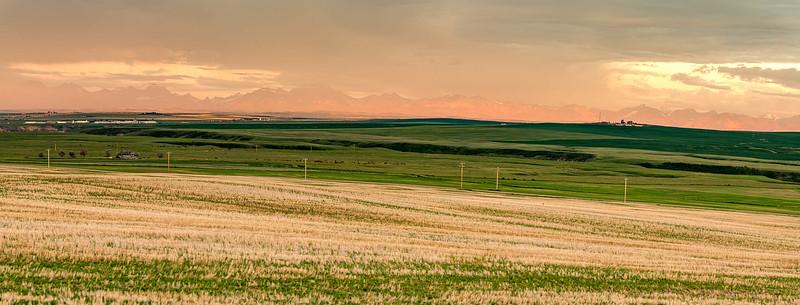 barley 68.jpg