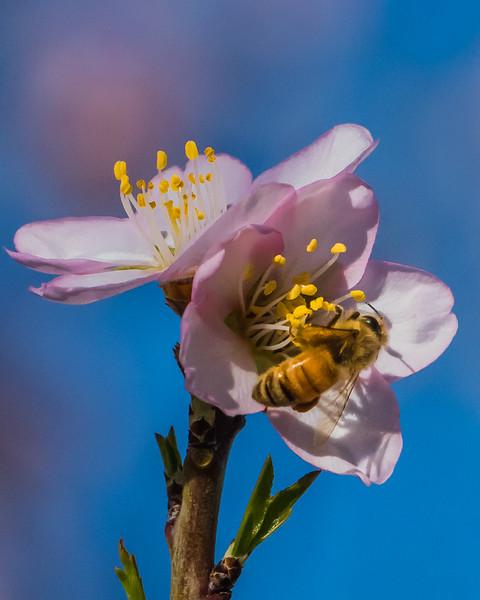 Spring Blossoms-2304.jpg