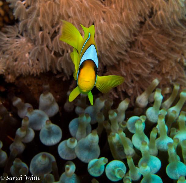 141108_Sharm2014_061.jpg