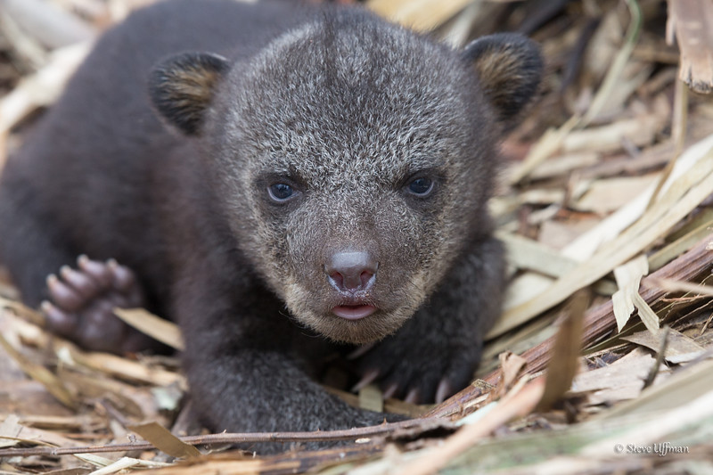 20150317-_Q2C4847Buckhorn-WMA-bears-Edit.jpg