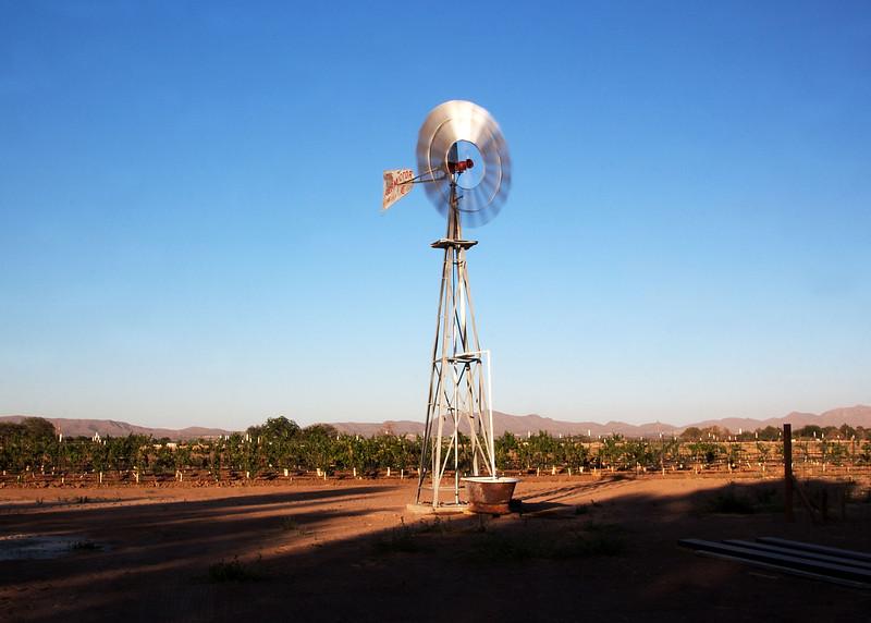 IMG_5612 windmill crp 1.jpg