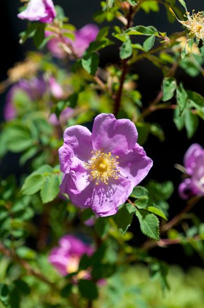 Wildflowers(2).jpg