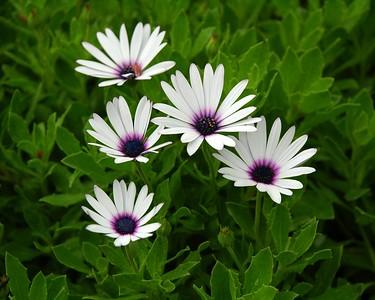Huntington - Random Flowers