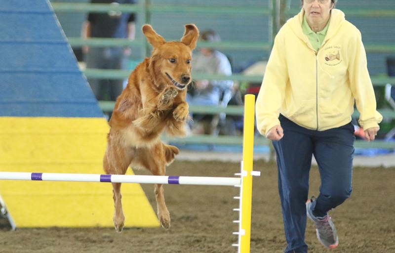 10-31-2015 Border Terrier-2011.jpg