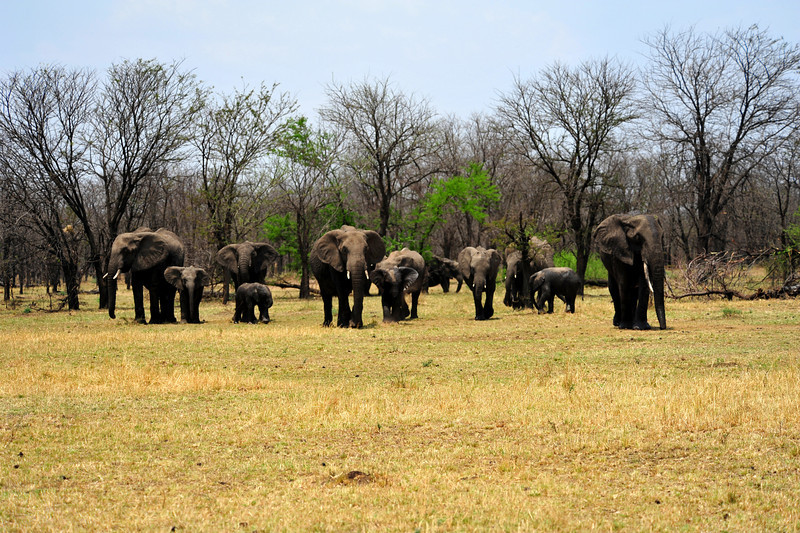 Africa 2010-056.JPG