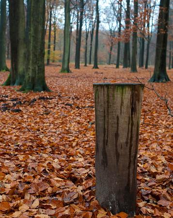 Wandelen Austerlitz november 2012