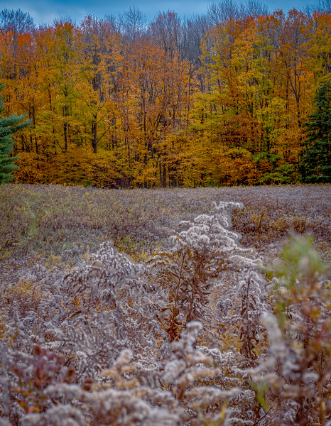 20201024-Columbia_Forest-038-Edit