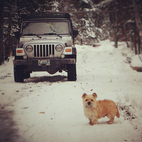 #Maine life with my #Cairn and #jeep