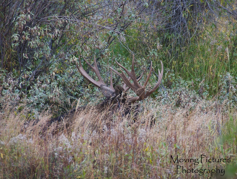 Grand Tetons NP - near Moose Junction