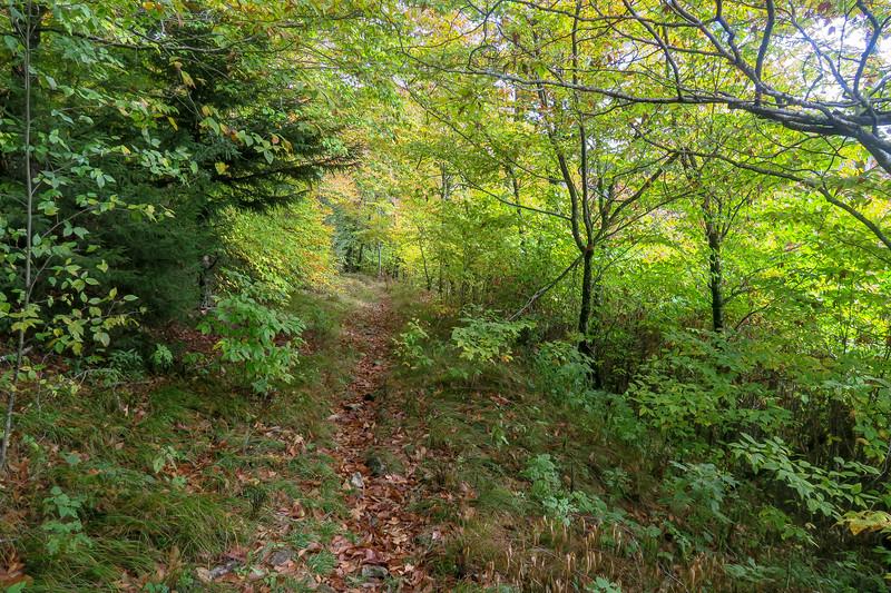 Little East Fork Trail -- 5,620'