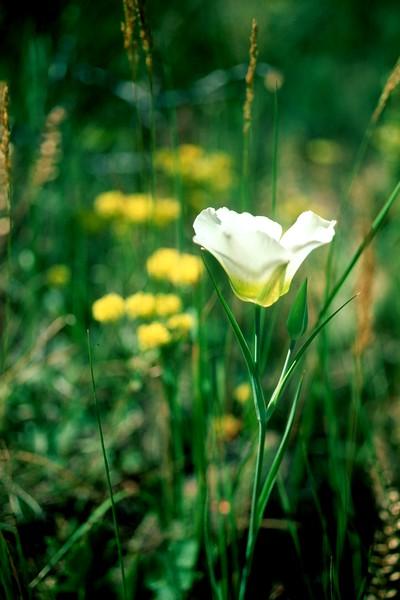 amh FLOWERS (1307).jpg
