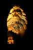 Photograph of a male lion statue. Photography fine art photo prints print photos photograph photographs image images artwork.