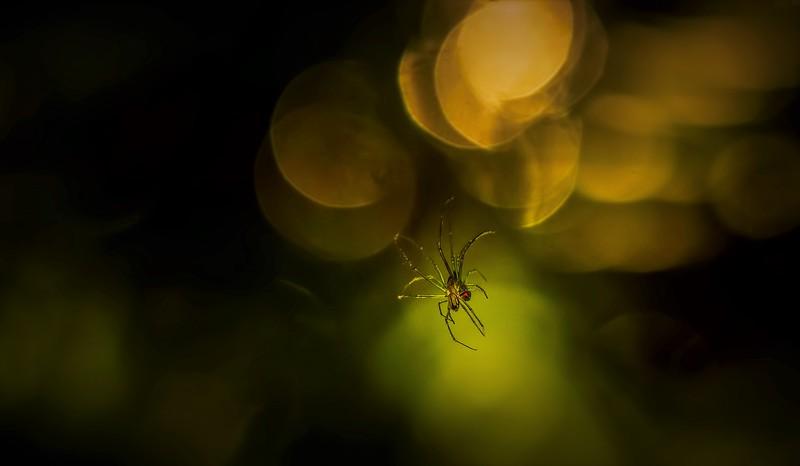 Spiders-Arachnids-164.jpg
