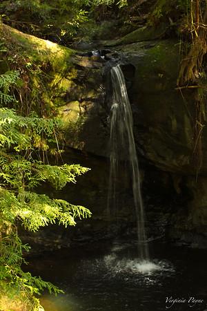 Big Basin Redwoods State Park 030815