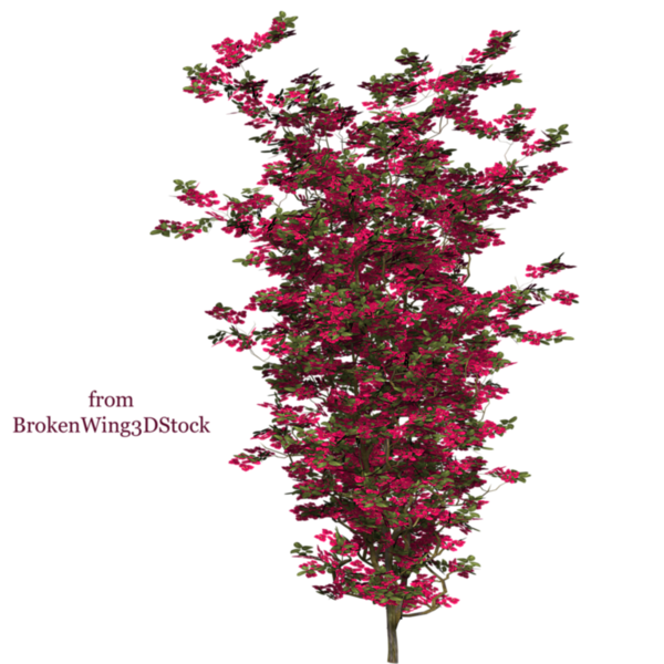 bougainvillea_05_by_brokenwing3dstock-d5mro00.png