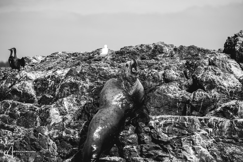 2019-08-31 - Whale Watching-2598_edit.jpg