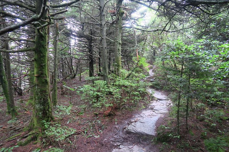 Watauga View Spur Trail -- 5,920'