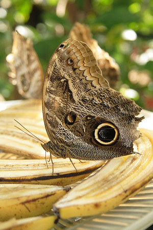 Butterfly World: Feb. 12, 2009
