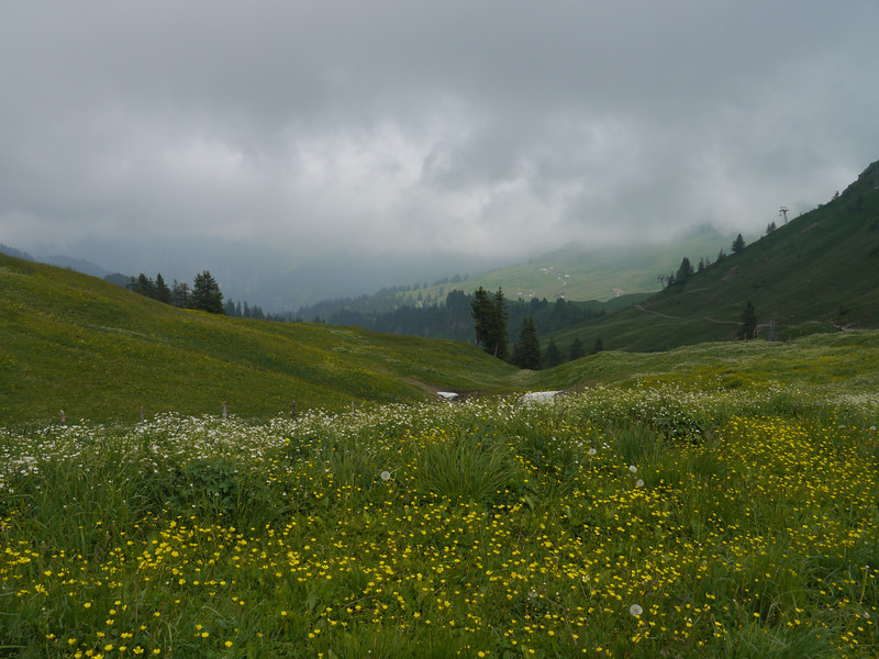 @RobAng 2013 / Bergspaziergang Hochybrig, Muotathal, Illgau, Kanton Schwyz, CHE, Schweiz, 1704 m ü/M, 2013/07/07 13:24:29