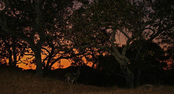 September 26, 2009 evening