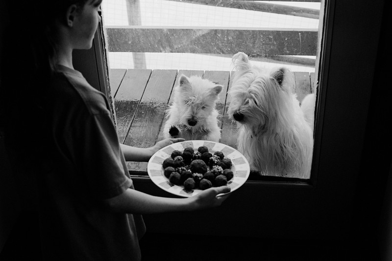 Dogs-are-offered-truffles.jpg