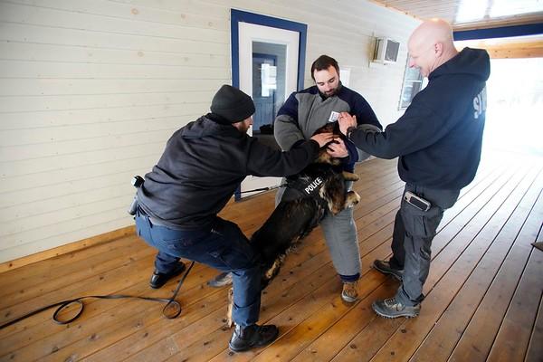 K-9 training for Berkshire police dogs - 031219