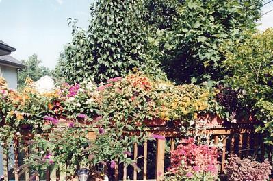 8-1-2000 Deck Flowers