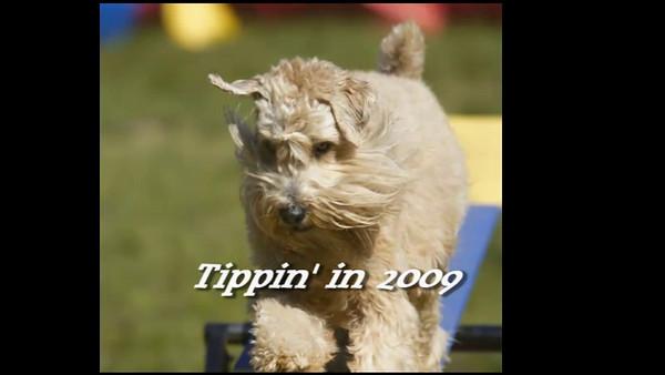 Tippin 2009