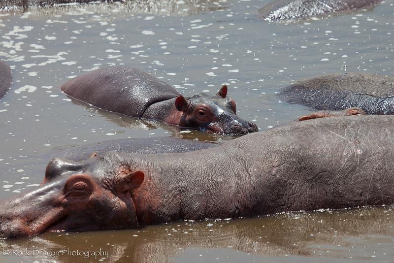 South_Serengeti-52.jpg