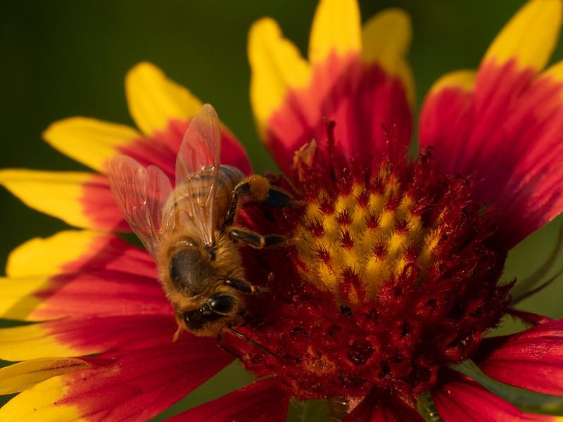 Sally's Bees, April 2020