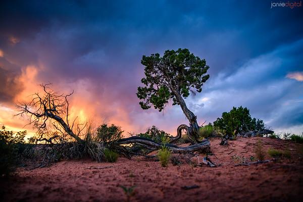Moab Scenic (June)