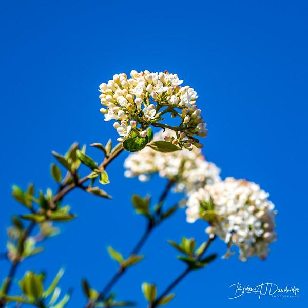 Spring blossom-2107.jpg