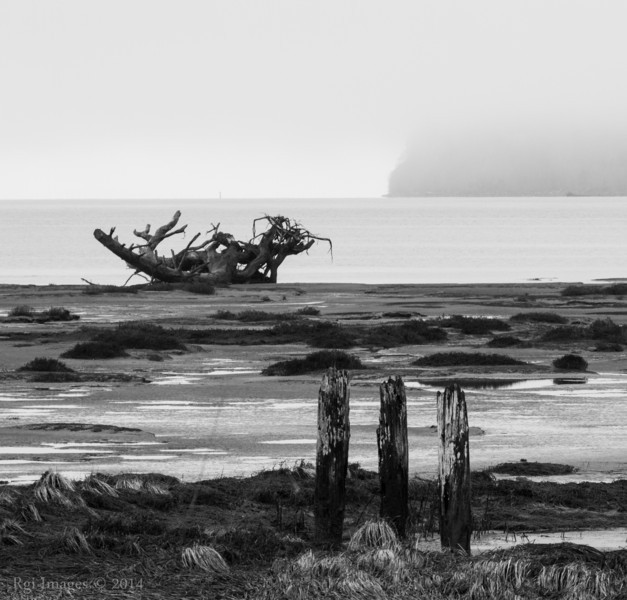A muddy view from the Grays Harbor National Wildlife Refuge.