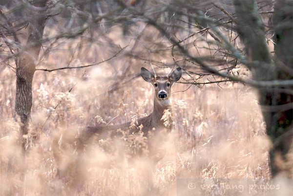 Springbrook Prairie Forest Preserve