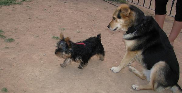 Maddie & Puppies Of Spain