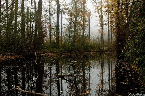 Fall Fog 08