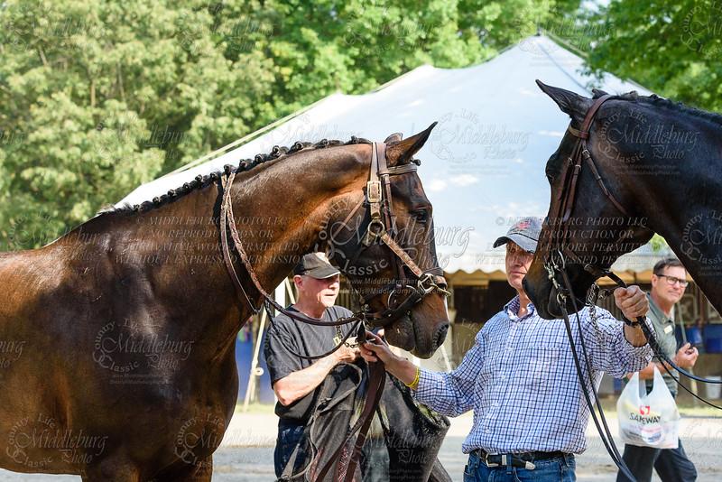 Hermen Greenburg Memorial Side Saddle Stakes
